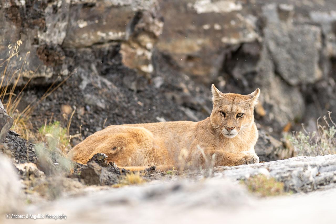 aka-Puma-2019-09-28__D5X9946.jpg