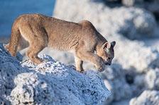 aka-Puma-2019-09-26__D5X7690.jpg