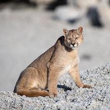 aka-Puma-2019-09-26__D5X7794.jpg