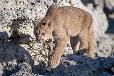 aka-Puma-2019-09-26__D5X7822.jpg