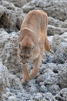 aka-Puma-2019-09-27__D5X8375.jpg