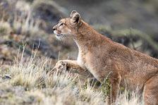 aka-Puma-2019-09-27__D5X8700.jpg