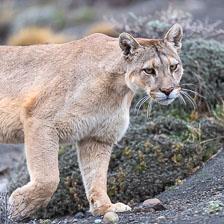 aka-Puma-2019-09-27__D5X9031.jpg