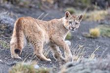 aka-Puma-2019-09-27__D5X9222.jpg