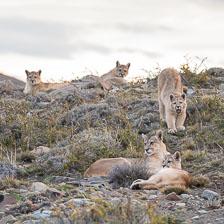 aka-Puma-2019-09-27__D5X9690.jpg