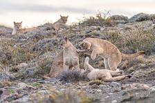 aka-Puma-2019-09-27__D5X9734.jpg