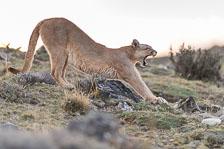 aka-Puma-2019-09-27__D5X9820.jpg