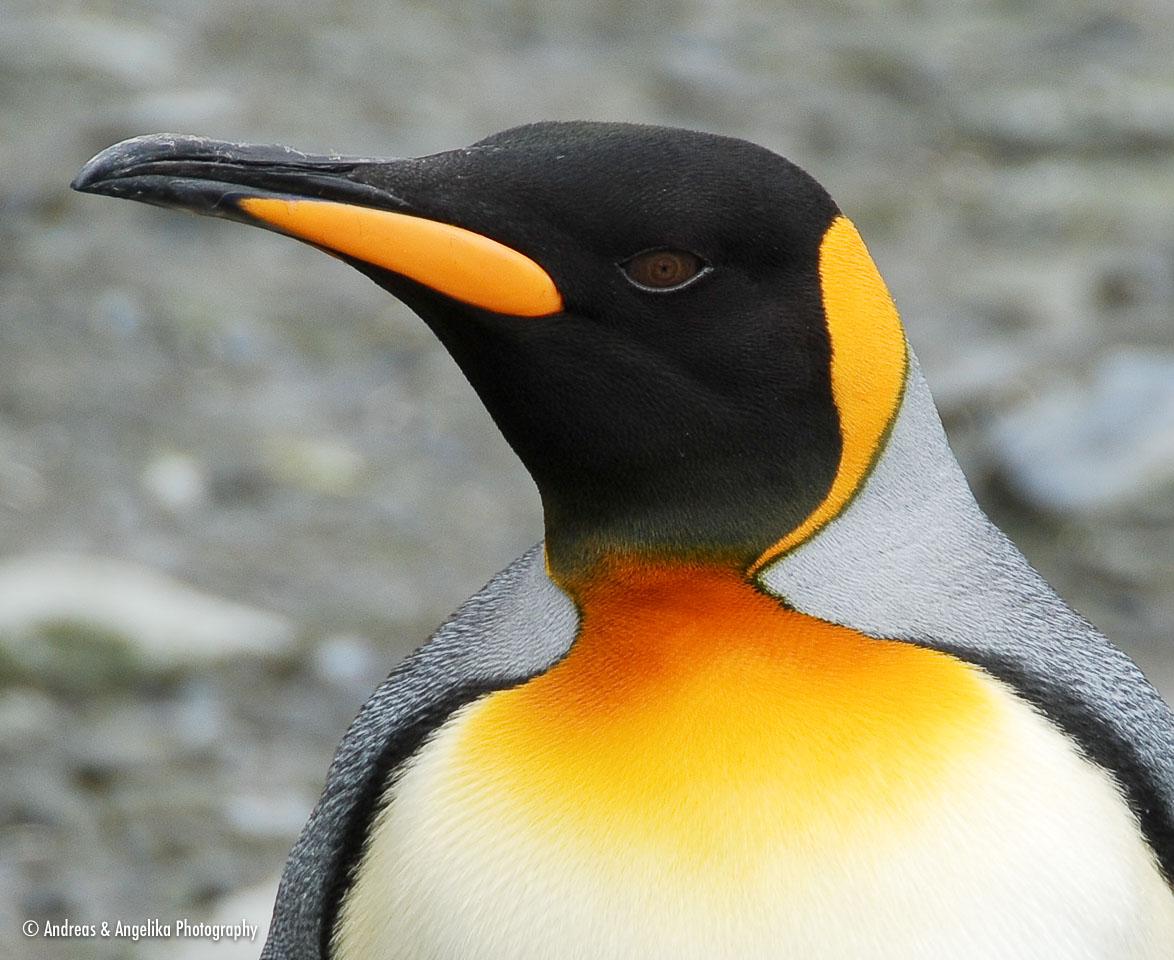 an-Antarctic-Quest-2009-01-26_DSC_3614.jpg