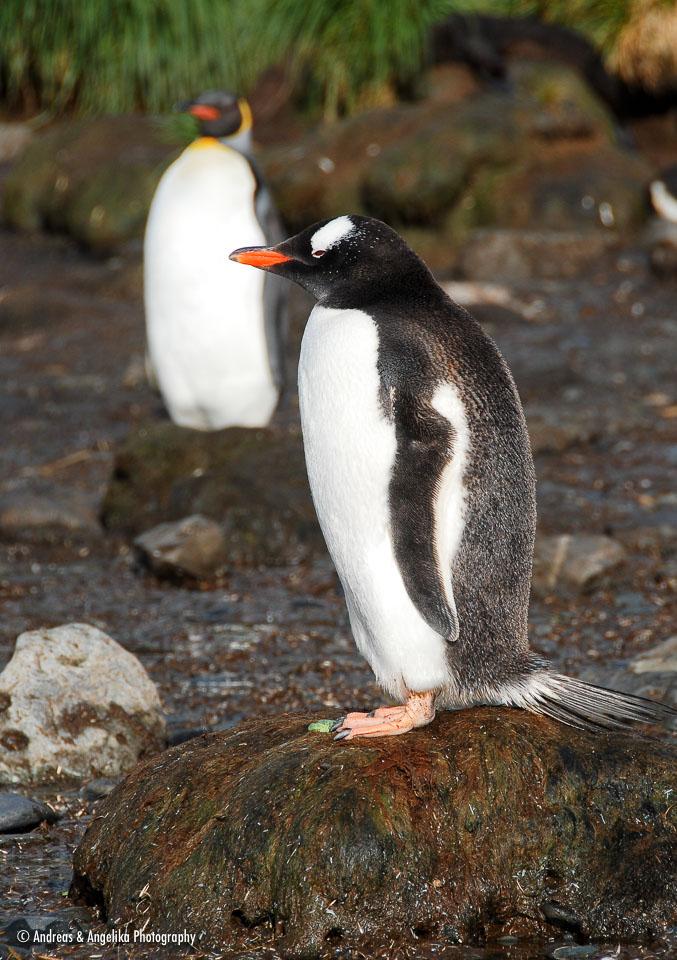 an-Antarctic-Quest-2009-01-27_DSC_4137.jpg