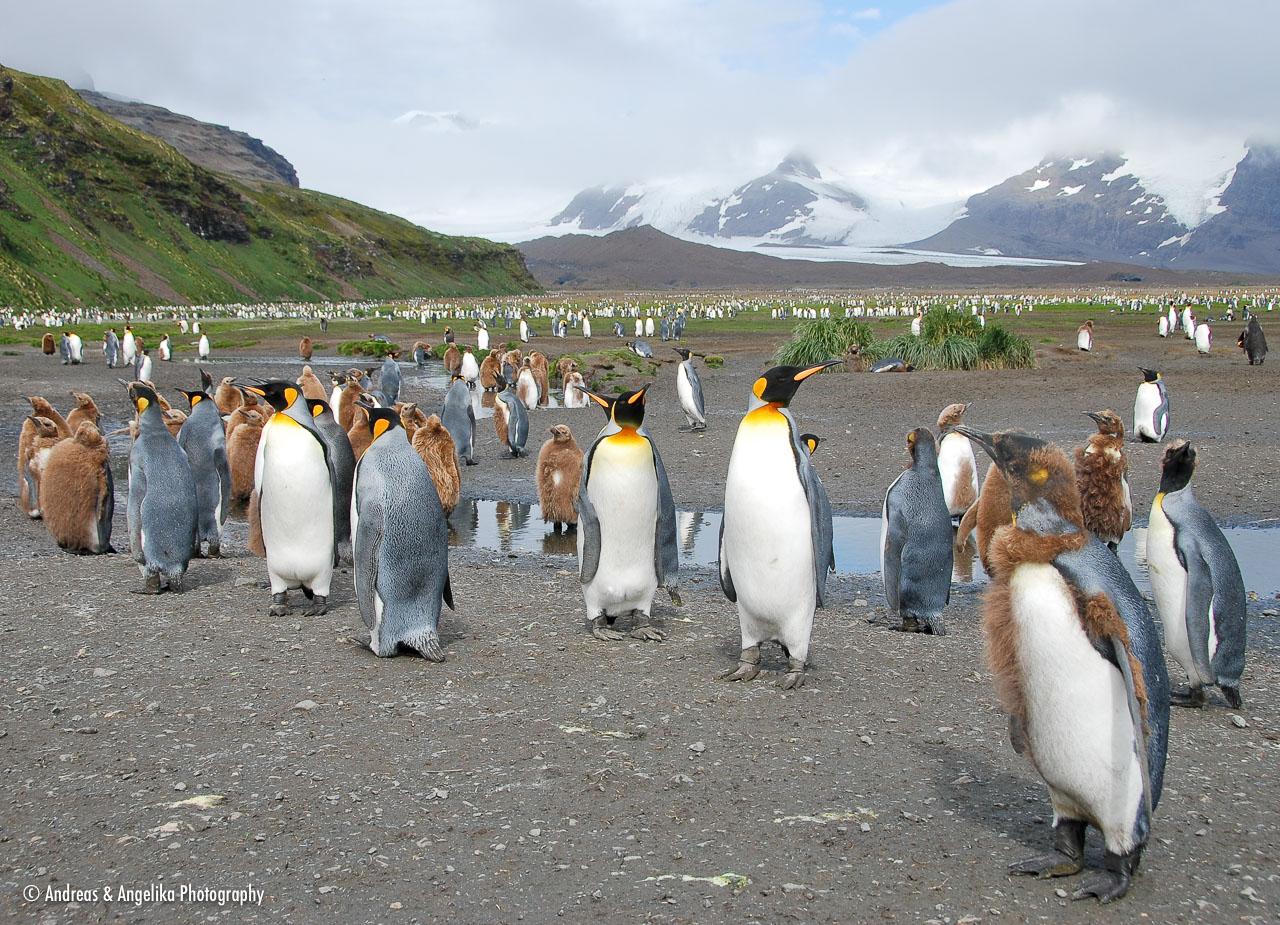 an-Antarctic-Quest-2009-01-27_DSC_4369.jpg