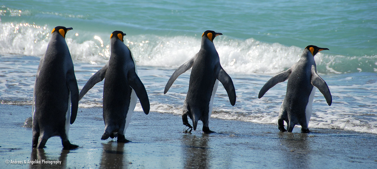 an-Antarctic-Quest-2009-01-27_DSC_4787.jpg