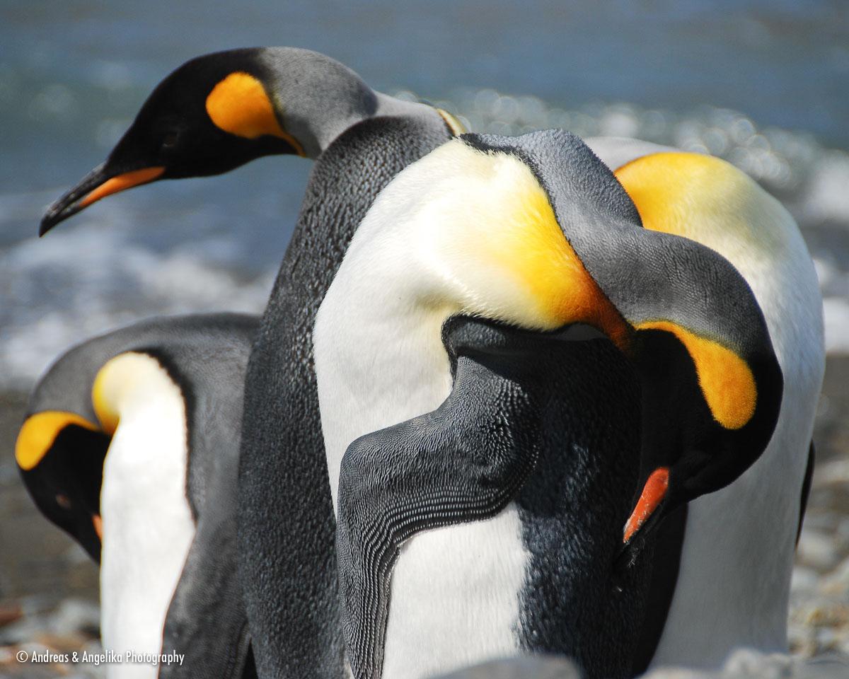 an-Antarctic-Quest-2009-01-27_DSC_4846.jpg
