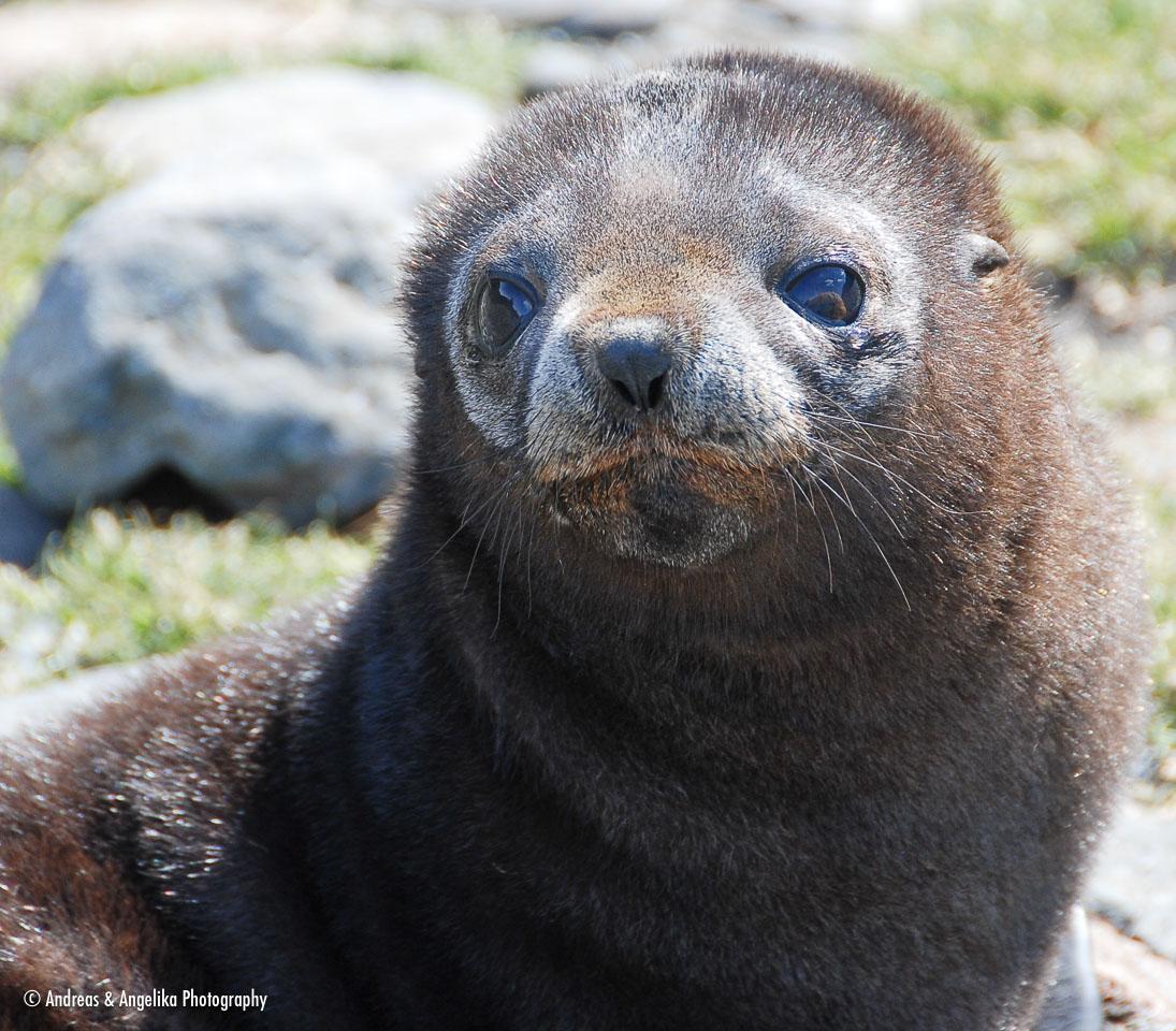 an-Antarctic-Quest-2009-01-27_DSC_4915.jpg