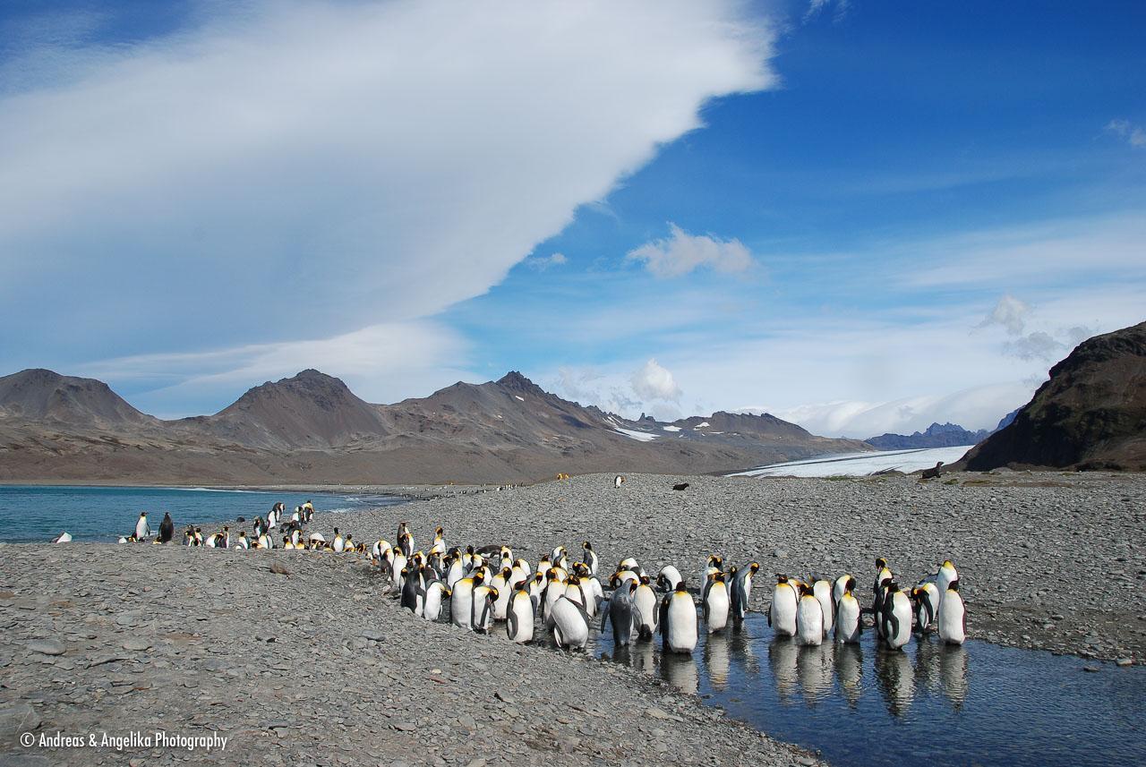 an-Antarctic-Quest-2009-01-27_DSC_5075.jpg