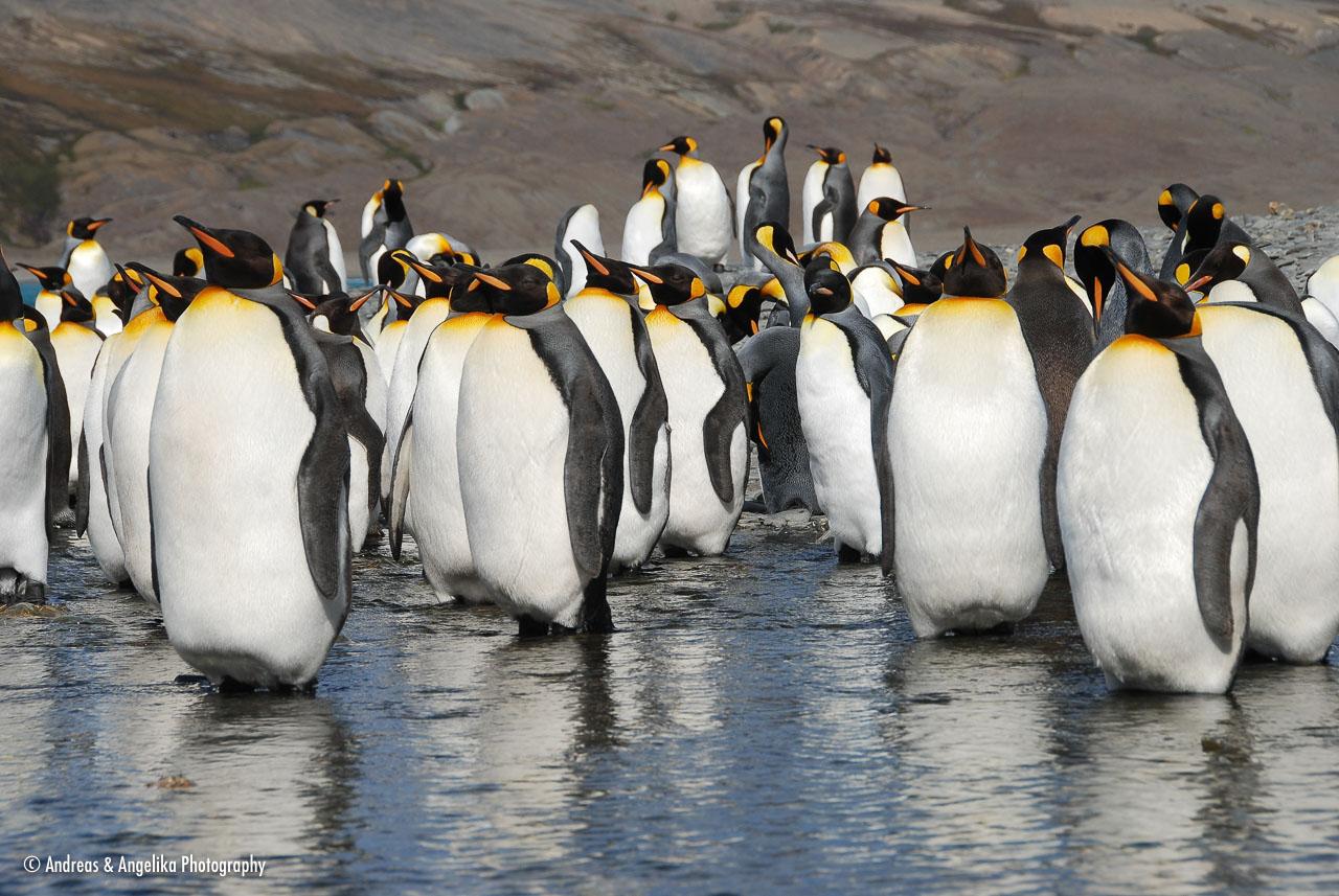 an-Antarctic-Quest-2009-01-27_DSC_5089.jpg