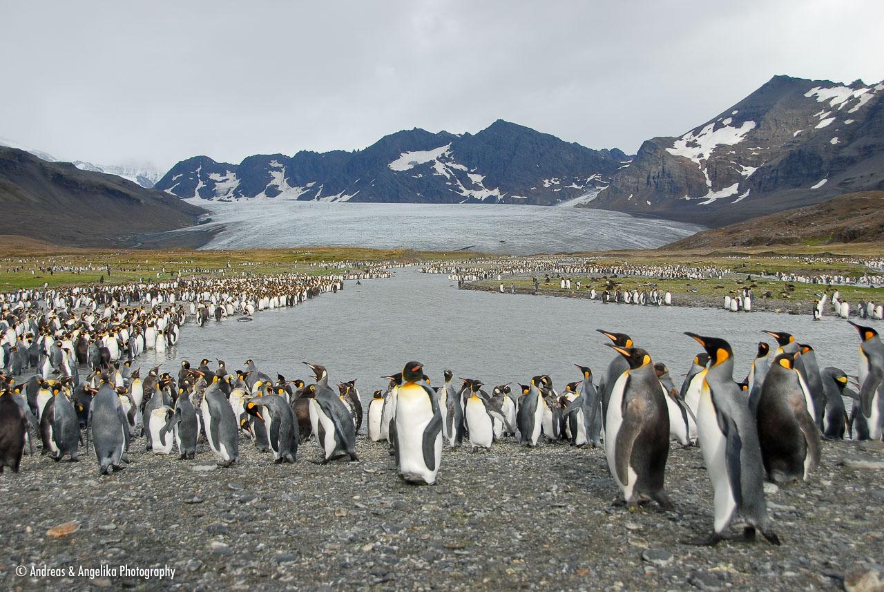 an-Antarctic-Quest-2009-01-28_DSC_5296.jpg