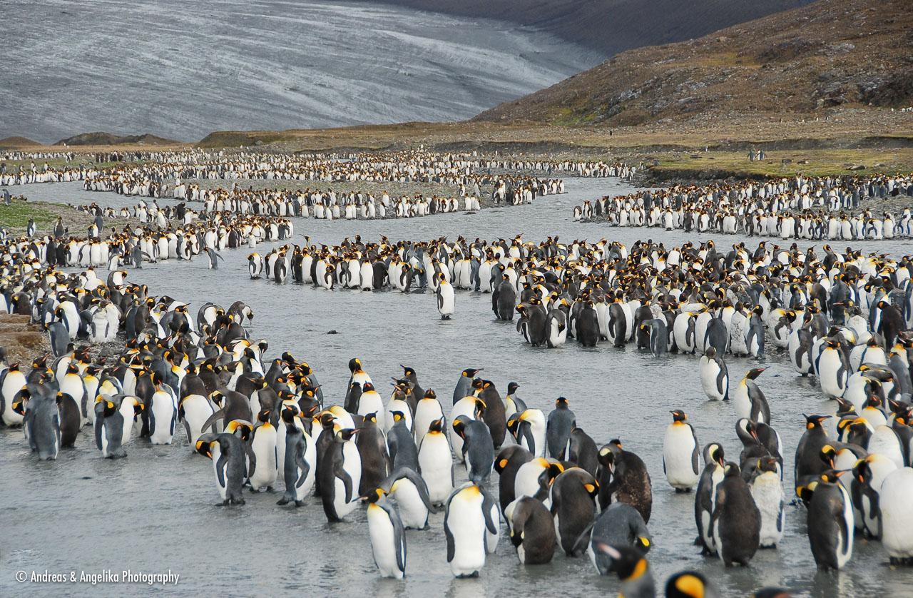 an-Antarctic-Quest-2009-01-28_DSC_5313.jpg