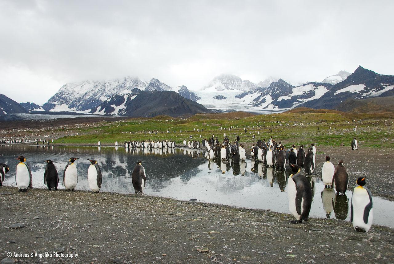 an-Antarctic-Quest-2009-01-28_DSC_5354.jpg