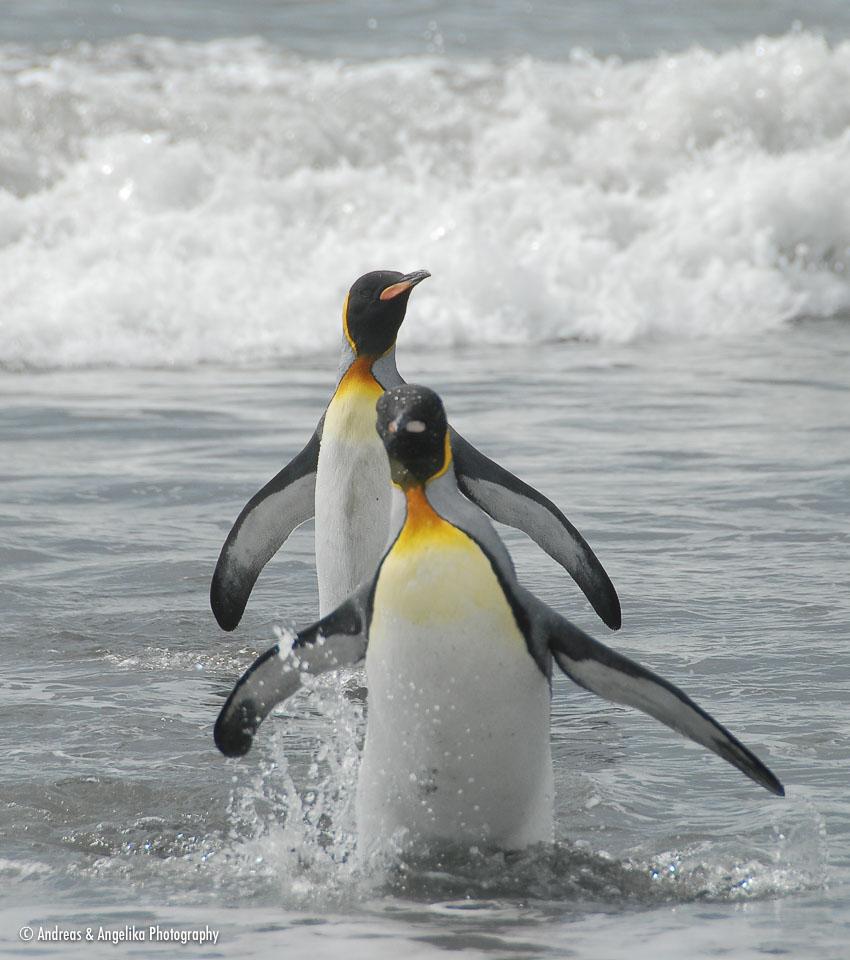 an-Antarctic-Quest-2009-01-28_DSC_5620.jpg