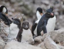 an-Antarctic-Quest-2009-01-22_DSC_2481.jpg