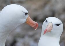 an-Antarctic-Quest-2009-01-22_DSC_2643.jpg