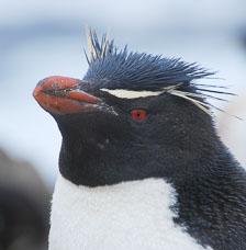 an-Antarctic-Quest-2009-01-22_DSC_2758.jpg