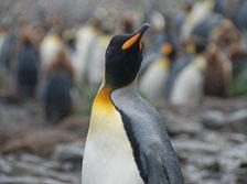an-Antarctic-Quest-2009-01-26_DSC_3706.jpg