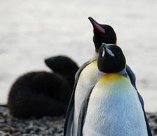 an-Antarctic-Quest-2009-01-27_DSC_3892.jpg