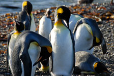 an-Antarctic-Quest-2009-01-27_DSC_3997.jpg
