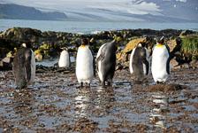 an-Antarctic-Quest-2009-01-27_DSC_4112.jpg