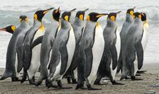 an-Antarctic-Quest-2009-01-27_DSC_4198.jpg