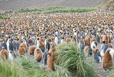 an-Antarctic-Quest-2009-01-27_DSC_4331.jpg