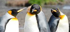 an-Antarctic-Quest-2009-01-27_DSC_4447.jpg