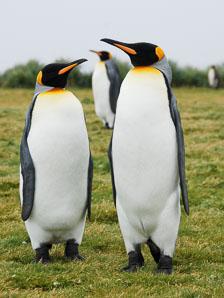 an-Antarctic-Quest-2009-01-27_DSC_4561.jpg