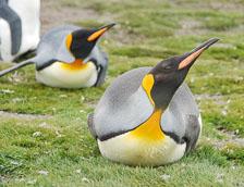 an-Antarctic-Quest-2009-01-27_DSC_4575.jpg