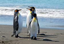 an-Antarctic-Quest-2009-01-27_DSC_4718.jpg