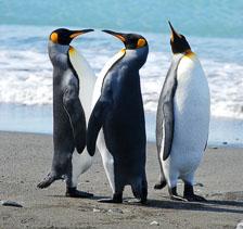 an-Antarctic-Quest-2009-01-27_DSC_4736.jpg