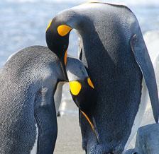 an-Antarctic-Quest-2009-01-27_DSC_4754.jpg