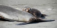 an-Antarctic-Quest-2009-01-27_DSC_4809.jpg