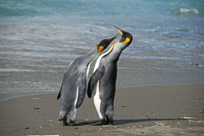 an-Antarctic-Quest-2009-01-27_DSC_4974.jpg