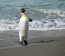 an-Antarctic-Quest-2009-01-27_DSC_5002.jpg