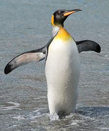 an-Antarctic-Quest-2009-01-27_DSC_5005.jpg