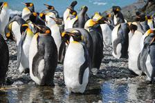 an-Antarctic-Quest-2009-01-27_DSC_5041.jpg