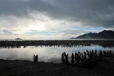 an-Antarctic-Quest-2009-01-28_DSC_5360.jpg
