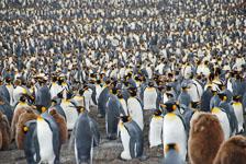 an-Antarctic-Quest-2009-01-28_DSC_5376.jpg