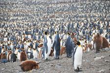 an-Antarctic-Quest-2009-01-28_DSC_5408.jpg