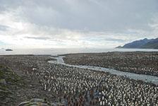 an-Antarctic-Quest-2009-01-28_DSC_5458.jpg