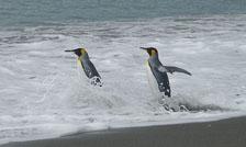 an-Antarctic-Quest-2009-01-28_DSC_5602.jpg