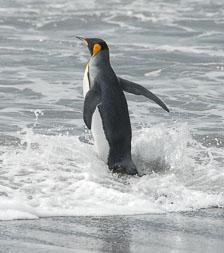 an-Antarctic-Quest-2009-01-28_DSC_5615.jpg