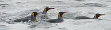 an-Antarctic-Quest-2009-01-28_DSC_5634.jpg